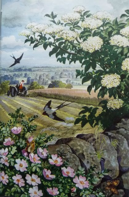 Vintage Illustrations-Ladybird Books. Hedgerow with wild rose and elderberry.