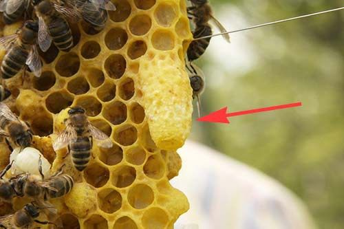 How to Split Your Beehive With a New Queen and Prevent Swarming