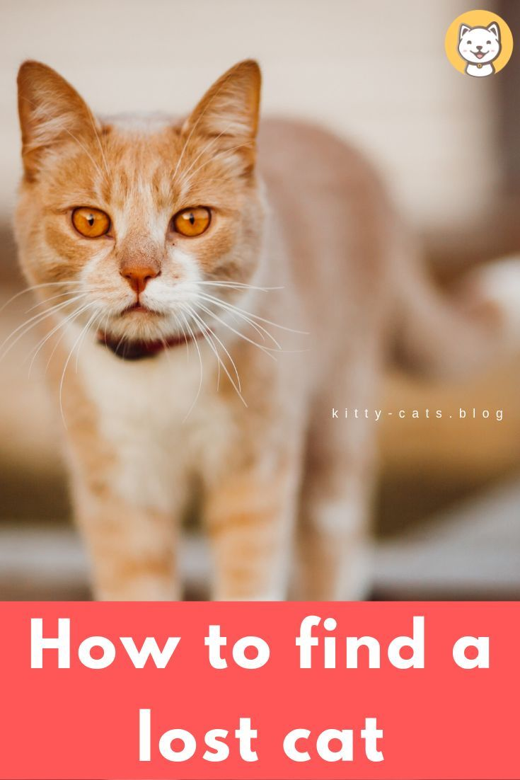 How To Get A Lost Cat To Come Back Home Kitty Cats Blog Lost Cat Cats Cat Facts