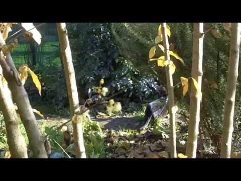 Il tigrone della foresta | Granny's House