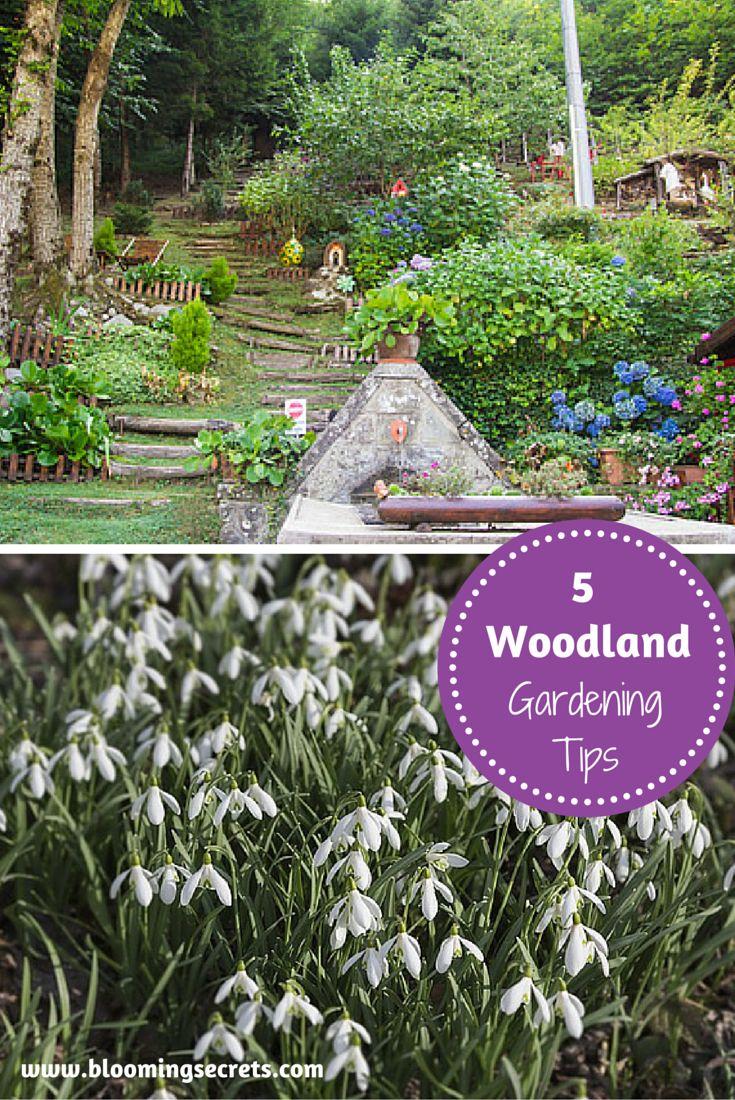 112 Best Blooming Secrets Blog Images On Pinterest 400 x 300