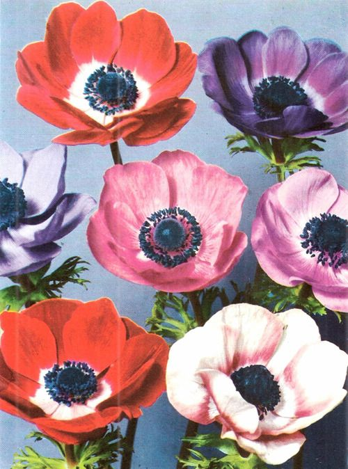 I'm really looking forward to spring - I miss my garden. Last summer I harvested my flower seeds - poppies and wildflowers - see you soon!