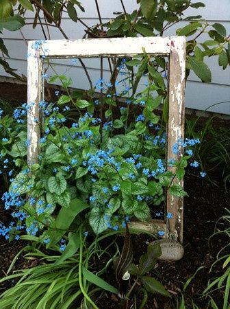 "Framed"" flowers! -  Garden Junk Ideas Old single pain window frame without the glass."