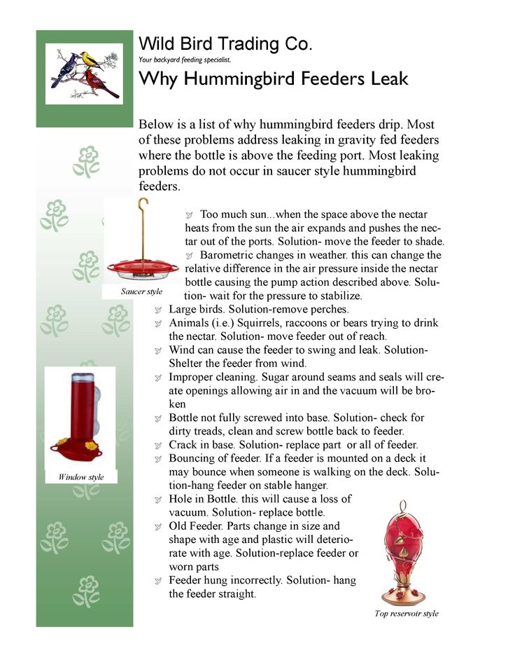 Why hummingbird feeders leak