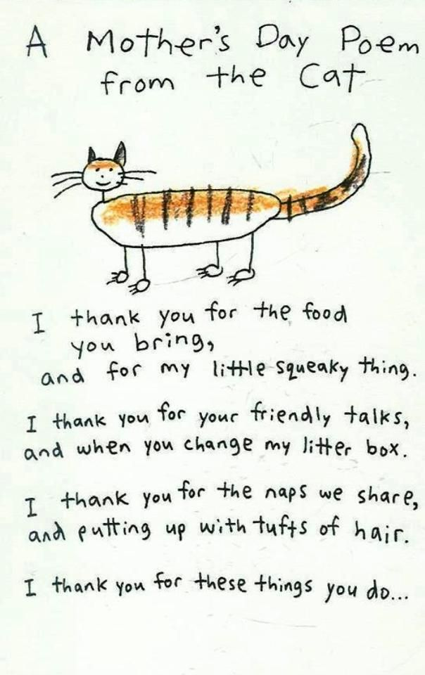 Mothers Day poem from the Cat