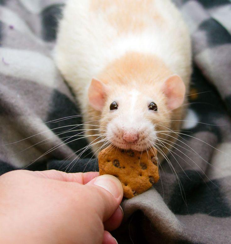 les-aventures-de-marty-mouse-souris-qui-est-en-fait-un-rat-24 Les aventures de Marty Mouse