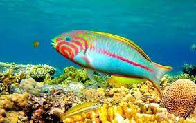 Paqute de viaje Egipto,Mar Rojo y tour en Hurgada a las playas del mar Rojo y poseo por el mar Rojo en Egipto #Hurgada #paquete_de_viaje_Egipto  http://worldtouradvice.com/spanish/egipto-paquetes-de-viajes.html