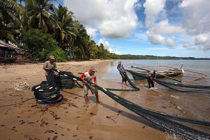 Fishermen hauling in a net at Tanayae Beach on the east-coast of North Nias Regency, Nias Island, Indonesia. Photo by Bjorn Svensson. www.northniastourism.com