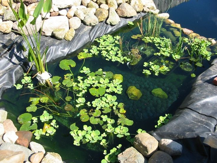 100 best images about pond bog filter ideas and designs on for Pond plant filter