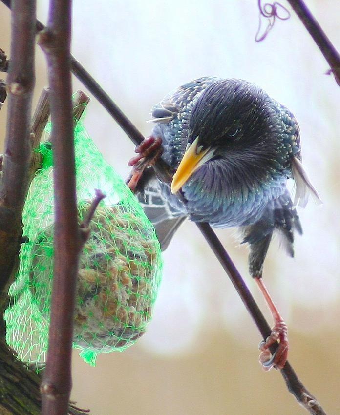Pin Von Cecilia Bowerman Auf My Bird Garden Vogel Im Garten Locken Machen Garten