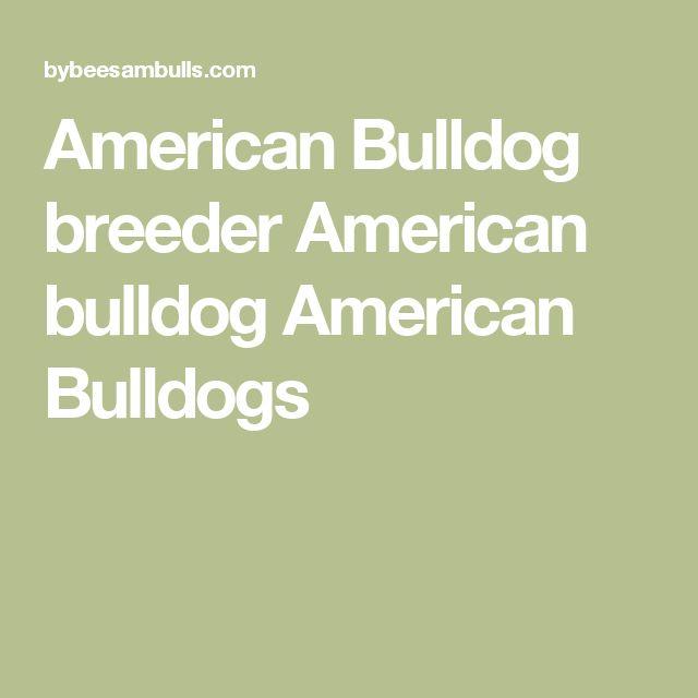 American Bulldog breeder American bulldog American Bulldogs