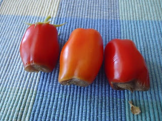 Blossom End Rot on Tomatoes: Gardens Ideas, Gardens Veggies, Gardens Bloggers, Gardens Smart, Blossoms End Rot, Oysters Shells, Tomatoes, Oyster Shells, Gardens Growing