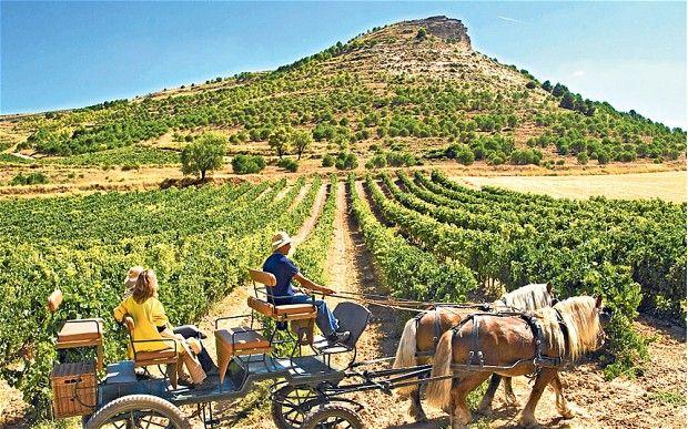 Ribera del Duero. #vineyards #spain