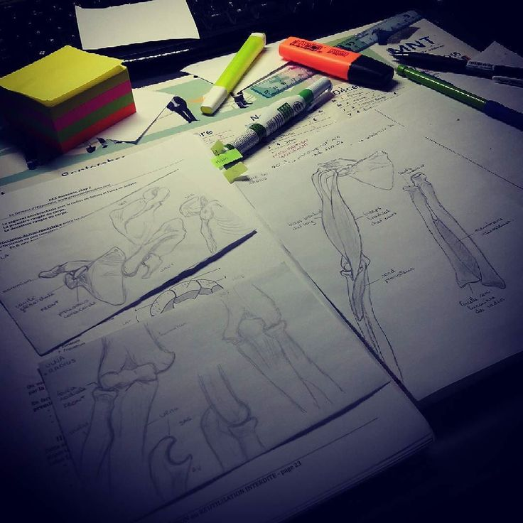 When I can do something I really love & my work  I'll go back to work or my man will kill me  #draw #drawing #love #skeleton #scapula #humerus #radius #ulna #arm #anat #anatomy #ReunionIsland #LaReunion #french #premed #work #study #studying #prepa #medlife #medicalschool #medschool #medicalstudent #medstudent #medicine #pacesgirl #paces #P1 by xxichii