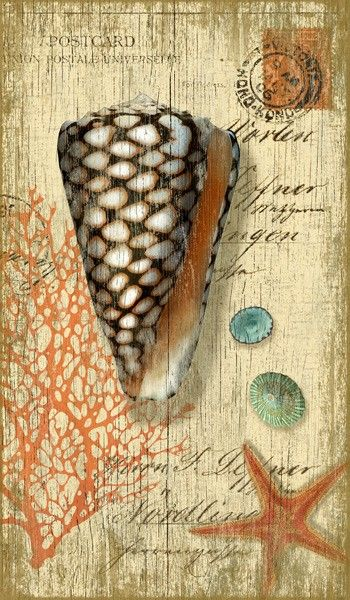 Suzanne Nicoll's wonderful botanical image of a black-brown and white cone shell with red sea fan and assorted seashells and starfish- perfect for a beach cottage room!
