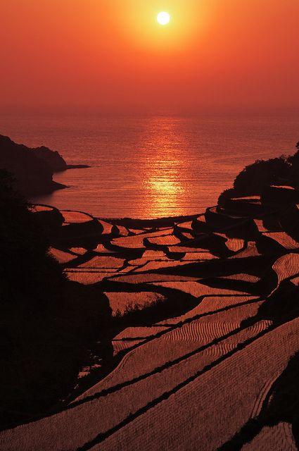 Rice paddies at sunset in Saga, Japan: photo by comolebi*, via Flickr