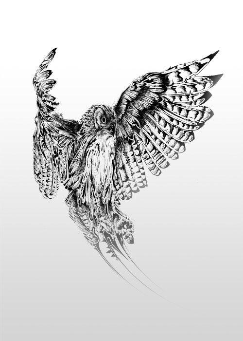 Sparrow Hawk | Si Scott Studio | Ink | Si scott, Art, How ...