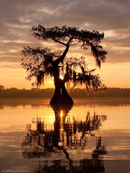 sunrise over lake Fausse Point, Louisiana
