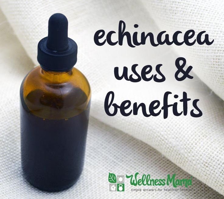Echinacea is a great herb for immune support, illness recovery and acute illness but it should not be used by some people like those with thyroid disease.