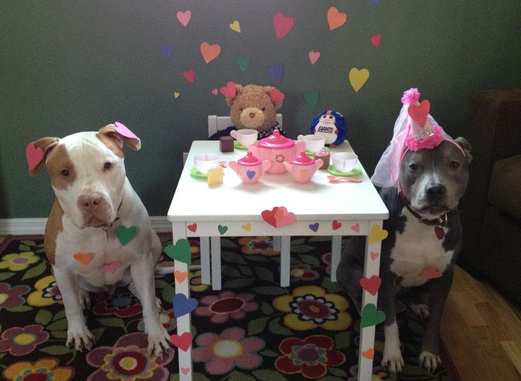 Pittie tea party  .. they need to be careful, they might give pitbulls a good name.  Mean does not wear hearts on the ears or pink hats.