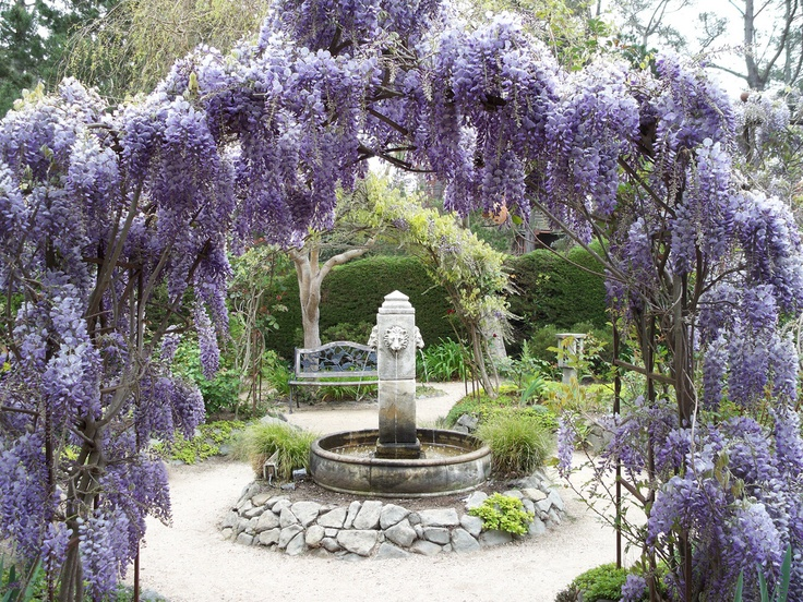 I love Wisteria.... this would be awesome by the pond :)