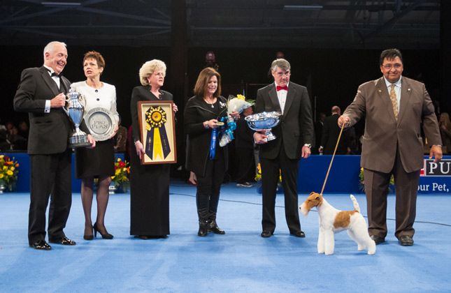 The 2012 National Dog Show winner is a 4-year-old named GCH Afterall Painting the Sky or Sky. This is the second year in a row a Wire Fox Terrier has won.