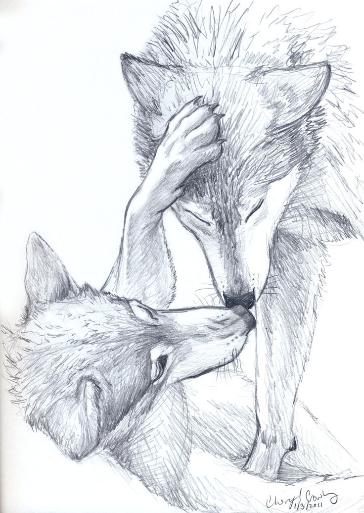Wolves sketch by *silvercrossfox How to draw Wolves, , how to draw animals, drawing realistic wolves, wolf, sketch, draw, tutorial, sketchbook,wolf, wolves, pack, art teacher, art lesson, wolf picture, wildlife sketchbook