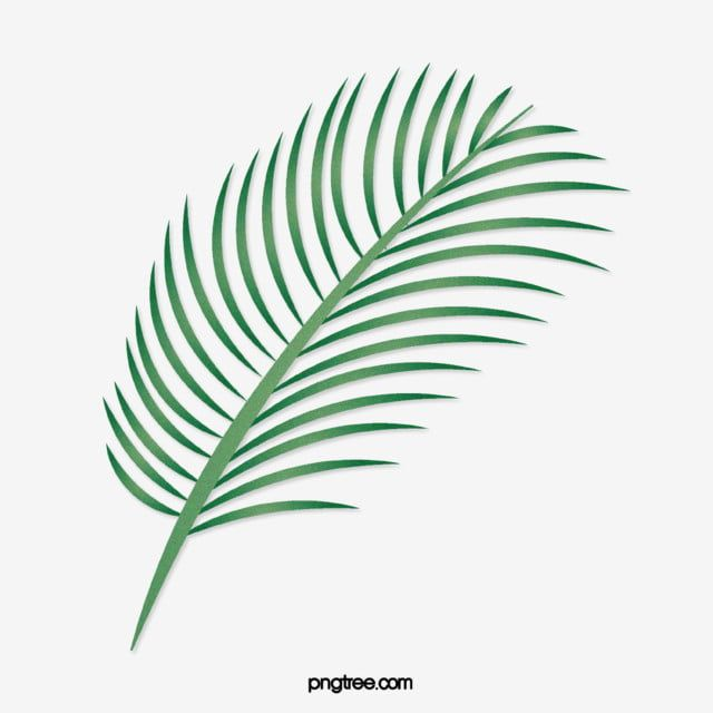 Cartoon Green Tropical Palm Leaves Cartoon Palm Leaves Cartoon Style Leaf Png And Vector With Transparent Background For Free Download Cartoon Styles Tropical Frames Leaves