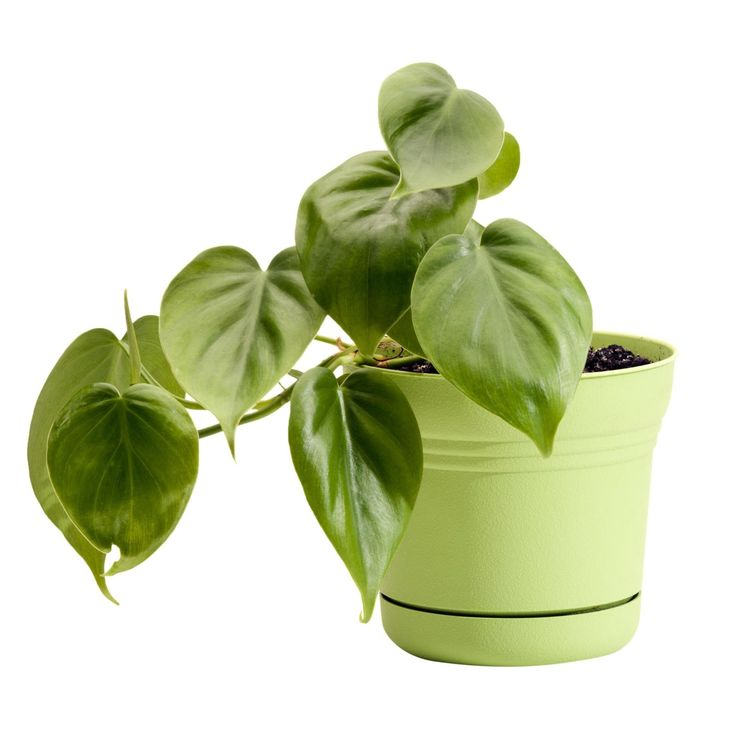 10+Houseplants+That+Can+Survive+in+Even+the+Darkest+Corner  - HouseBeautiful.com