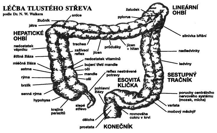 Léčba tlustého střeva