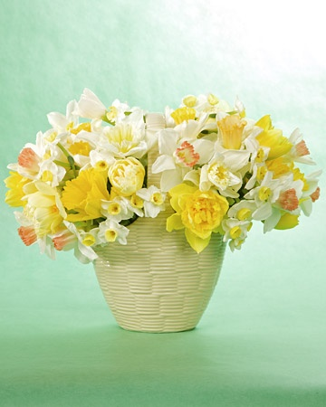 Springtime Arrangement  Brighten up your celebration of spring with a simple arrangement of lovely yellow and white daffodils and lady's mantle.