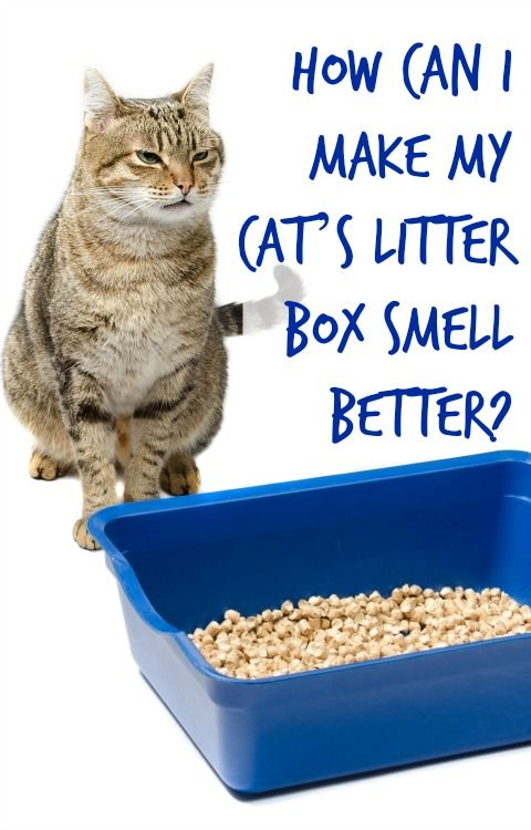 How To Make My Cats Breath Smell Better