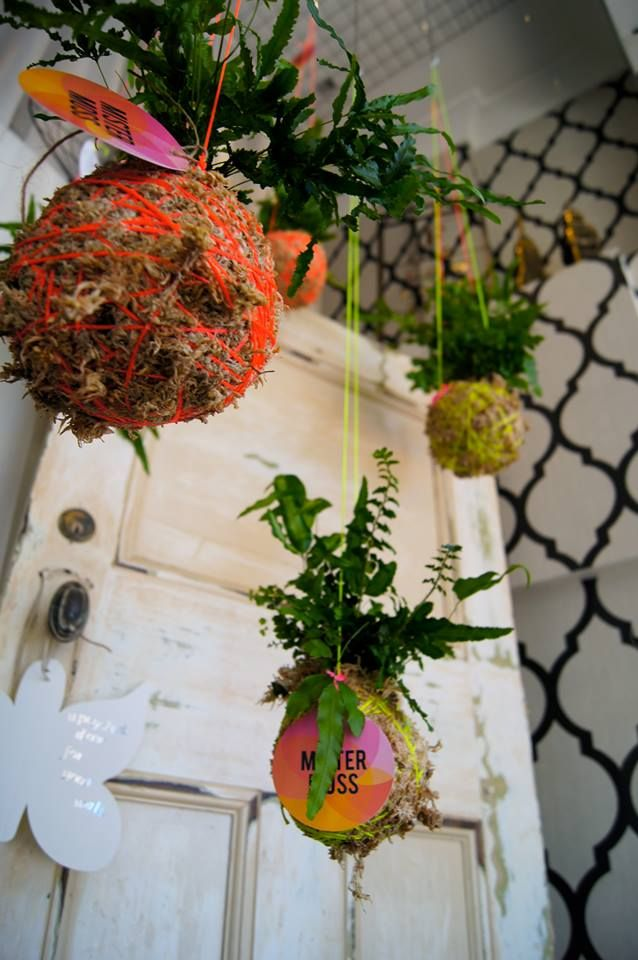 Mister Moss hanging ferns | Under $50 #QuirkyCowGifts #Christmas