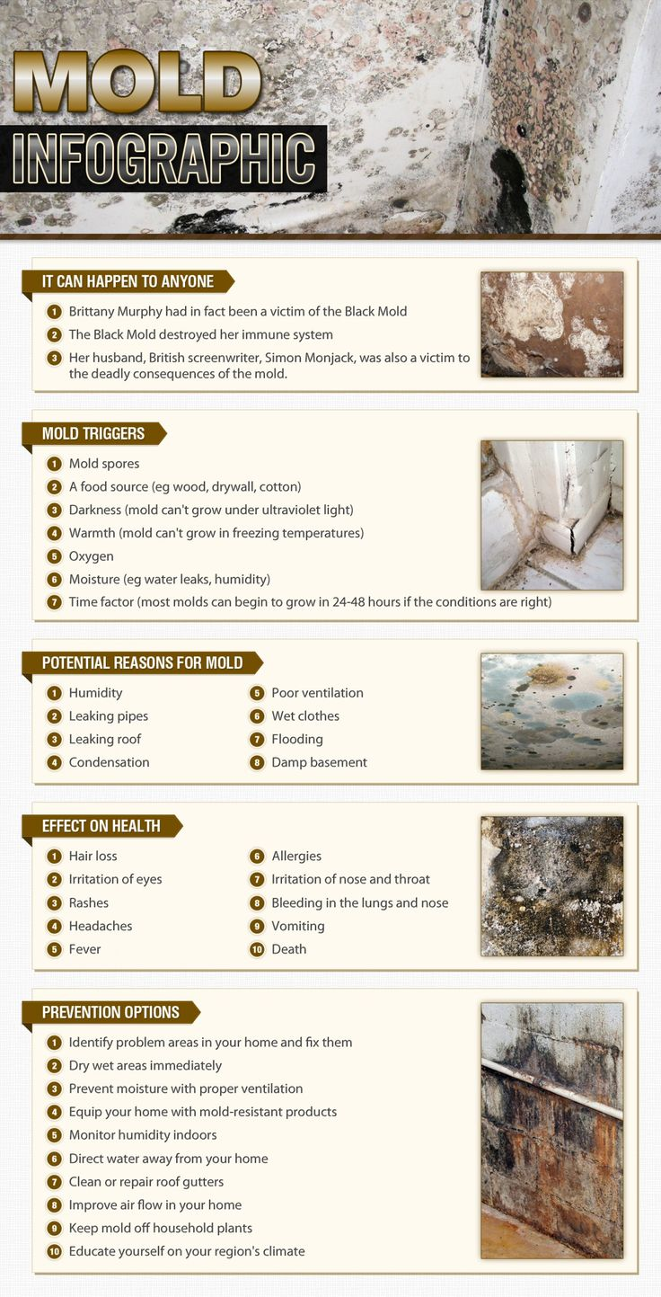 Dangers of black mold in bathroom - Get A Visual Look At Our Mold Infographic That Include Mold Triggers Potential Reasons For Mold Effects On Health And Prevention Options