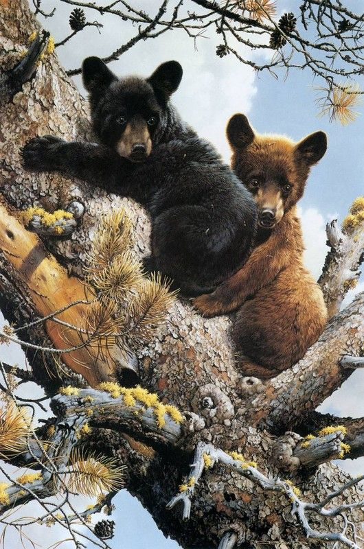 Bear cubs in a tree - painting by Carl Brenders