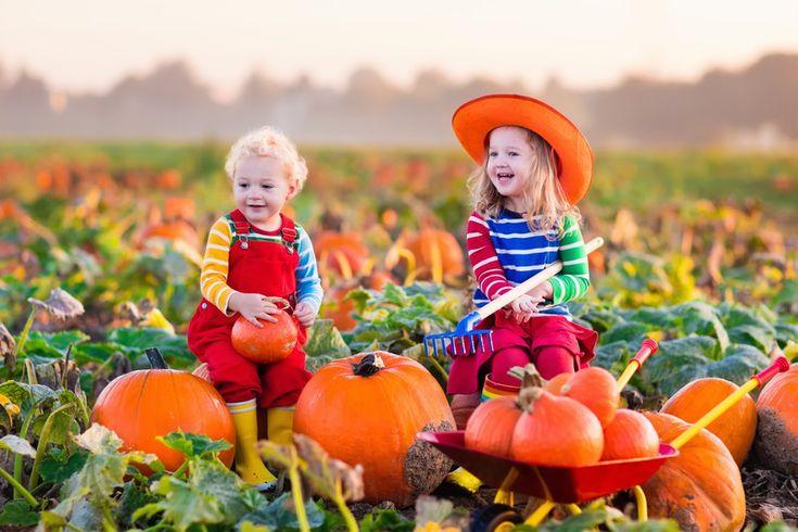 Pumpkin Picking In New Jersey - NJ Mom