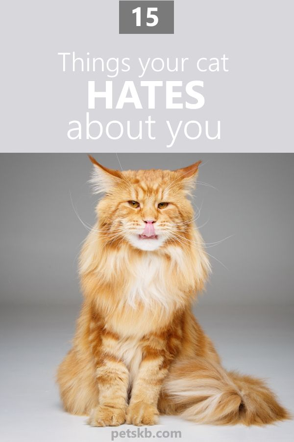 15 Things Your Cat Hates About You Cats Cat Info Pets