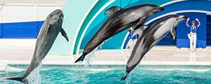 Kamogawa Sea World in Chiba, Japan ( Activity Program ) Official Website / 鴨川シーワールド