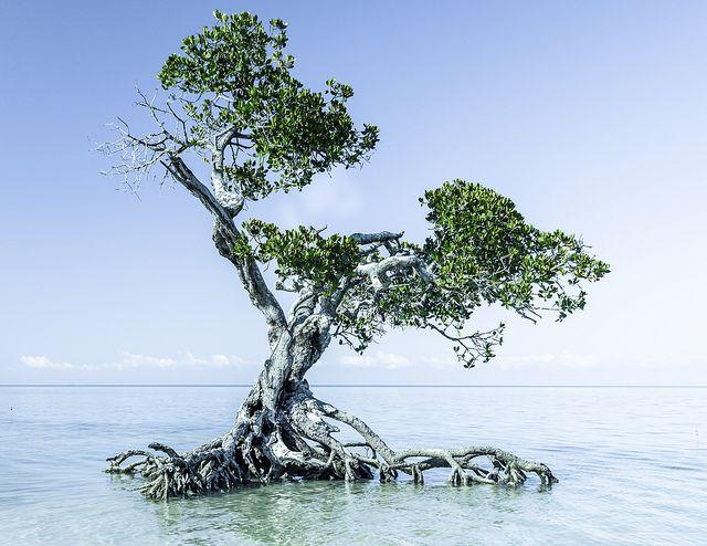 Mangrove swamp in Ouano beach