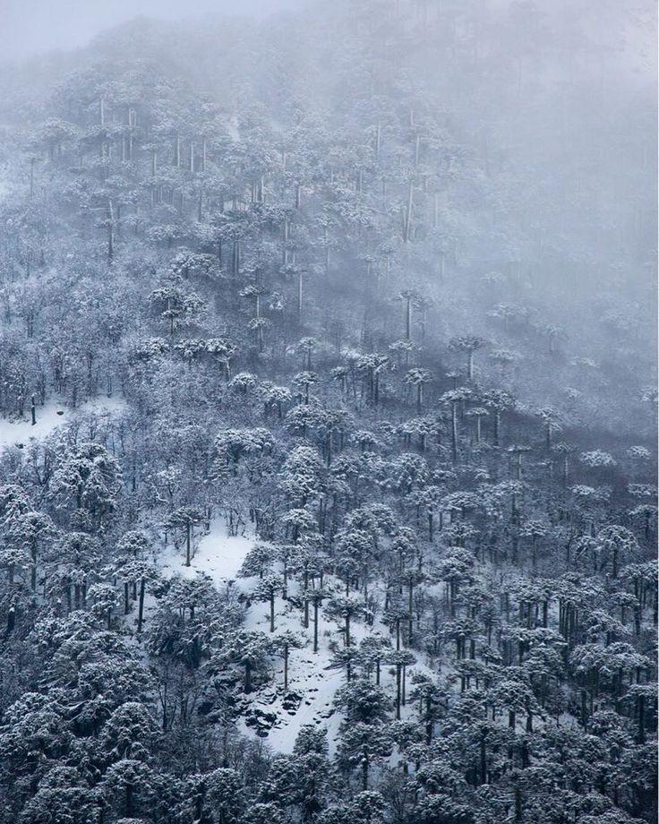 Malalcahuello, Región de la Araucanía. Chile ----National Geographic Chile (@natgeochile) • Fotos y vídeos de Instagram