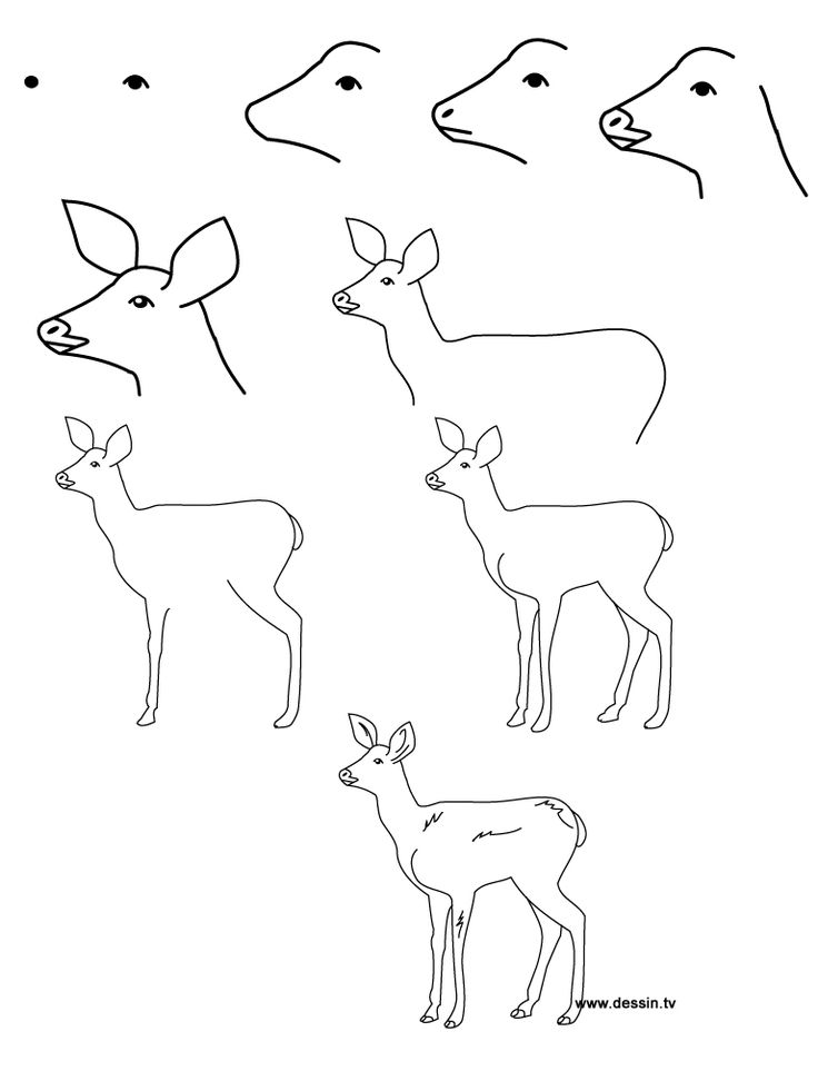 how to draw baby animals step by step | learn how to draw a fawn with simple step by step instructional (Drawing Step Learning)
