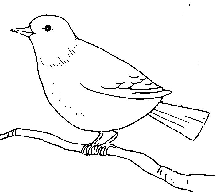 outline drawings of birds