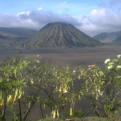 "Jono's tip at Bromo mountain  1919 년부터 보호 자연 보호 구역 마운트 브로 모는 ""모래의 바다""(: Segara Wedi 또는 인도네시아어 Lautan Pasir 자바어)라는 광대 한 평야의 중앙에 자리 잡고 있습니다. 마운트 브로 모를 방문 할 수있는 일반적인 방법은 Cemoro Lawang의 근처 산 마을에서입니다.  Category: Mountain in Jawa timur"
