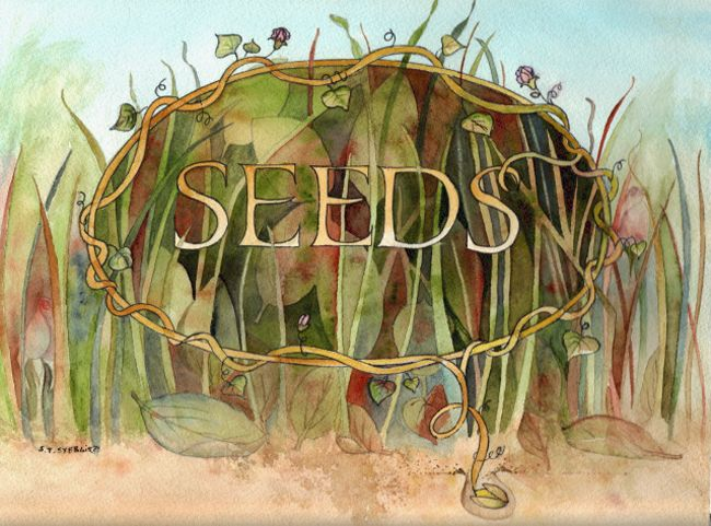 Seeds by Sally Towers-Sybblis