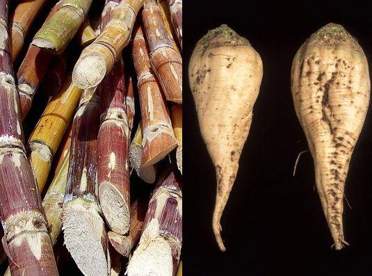 sugar cane and sugar beet -- 2013 KP fixes sugar cane and sugar beet prices