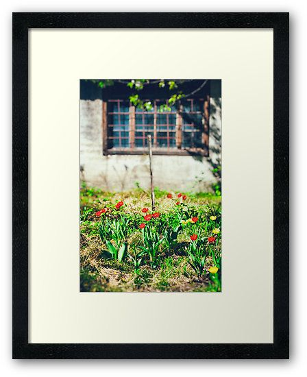 Beautiful tulips in a garden by Silvia Ganora • Also buy this artwork on wall #prints, #apparel, #stickers, and #wallclocks . #redbubble