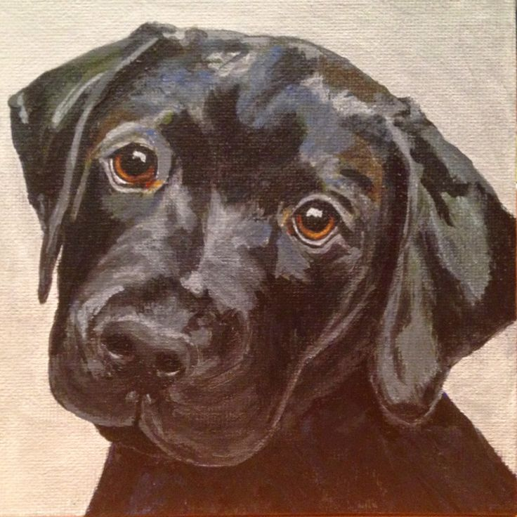 Kimberly Minear's Almost Daily Art Blog:  Little Black Lab Puppy - SoldBittersweet to let m...