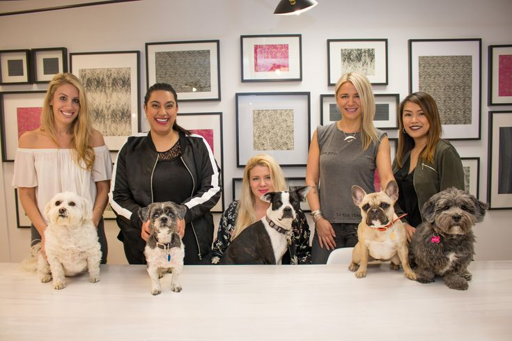 Rock-It promotions is one of Canada's coolest PR  firms. An element we totally feel has contributed to their success, has been their pet-friendly policy from day one.