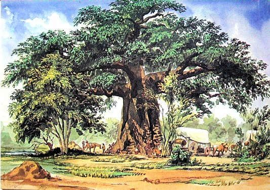Baobab Tree, a watercolour painted by Thomas Baines (1820-1875), dated 29 December 1861 South Africa Art, Art Galleries in South Africa, South African Artists.