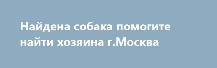 Найдена собака помогите найти хозяина г.Москва http://poiskzoo.ru/board/read31341.html  POISKZOO.RU/31341 Найдена собака! Порода неизвестная, дворняга. Трехцветная окраска. Девочка, подросток. Левобережный район. На ней кожаный темно-коричневый ошейник и белый от блох! Помогите найти хозяина   РЕПОСТ! @POISKZOO2 #POISKZOO.RU #Найдена #собака #Найдена_собака #НайденаСобака #Москва